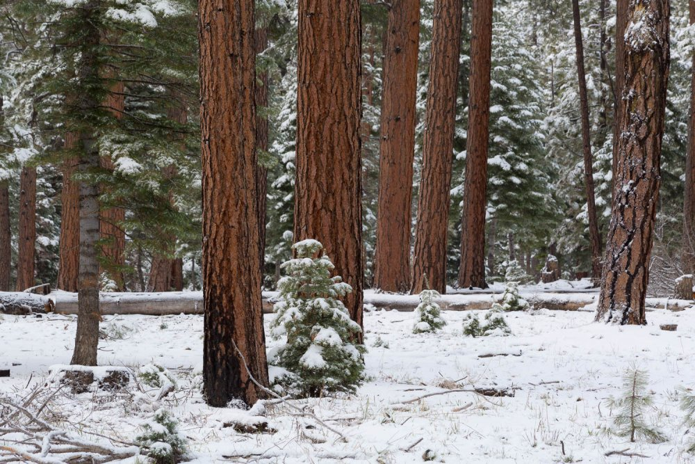 Winter Weather in Evergreen Forest
