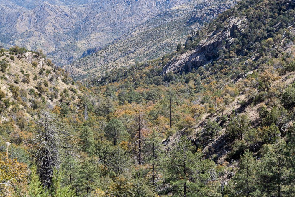 West Fork of Sabino Canyon