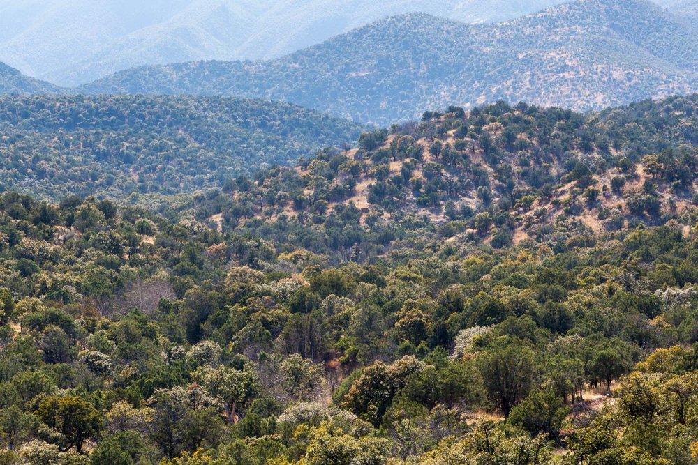Santa Rita Mountain Foothills