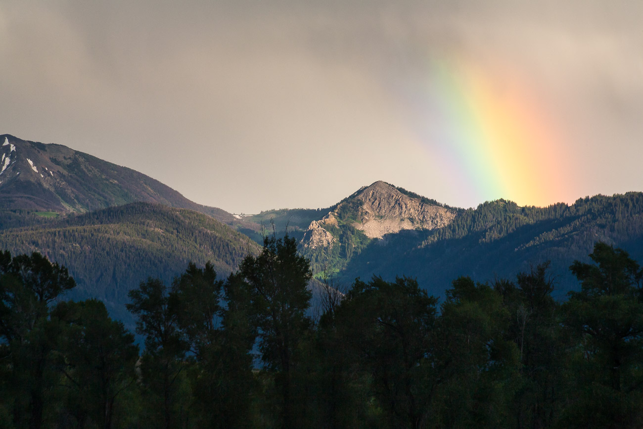 Abstract Winter Aspen Trees