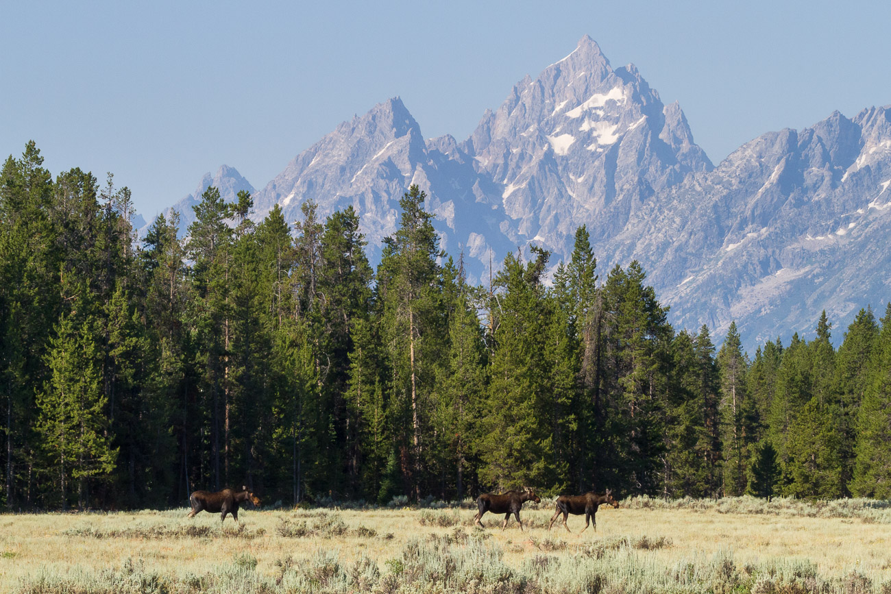 Black and White Grizzly Bear on Log