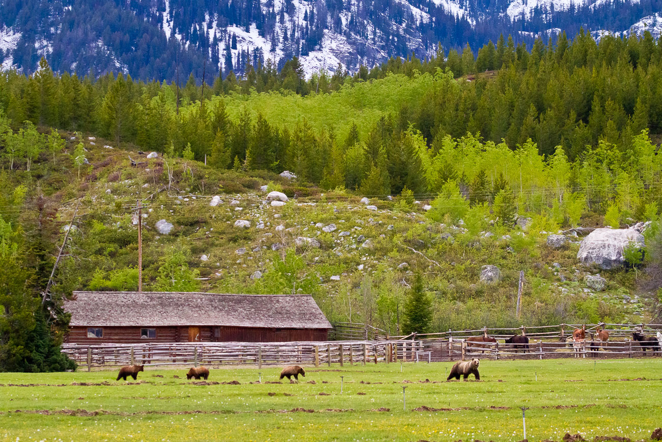 Teton Mountains at Dawn