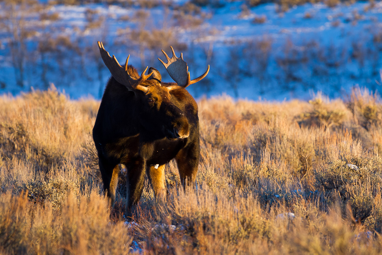 Flood Stage on the Gros Ventre River
