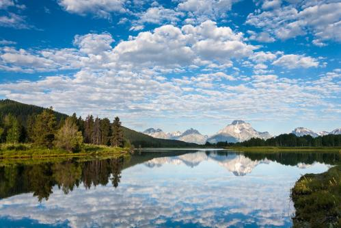 Abstract Winter Cottonwoods