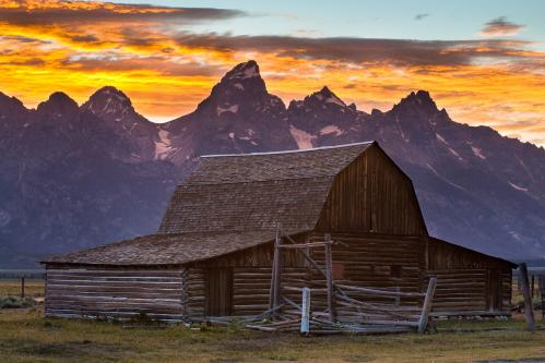 Pronghorn Running through Field