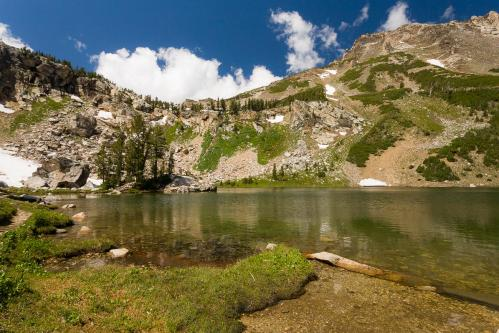 Grizzly Bear 399 and Cubs