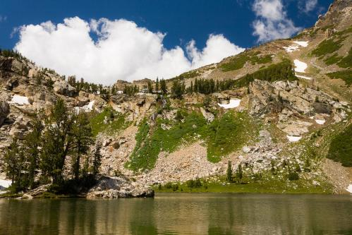 Grizzly Bear 399 on Ice