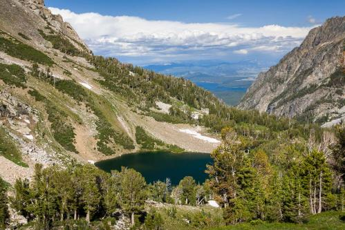 Bull Moose in Sagebrush Flats