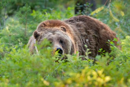Sunset Cloud Above Tetons