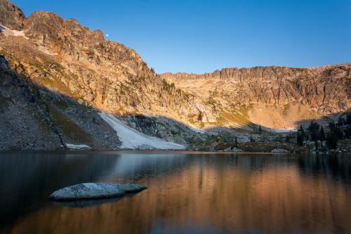 Bison in Sagebrush