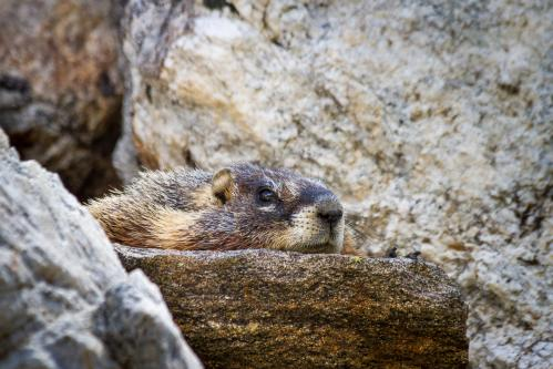 Bison Herd Below Sleeping Indian