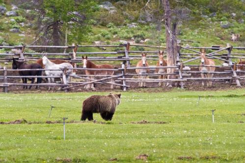 Mount Moran over Schwabacher Landing