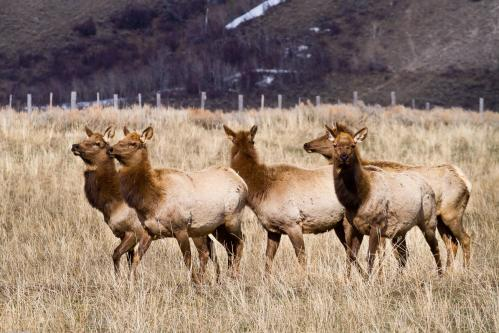Snake River Overlook Sunset
