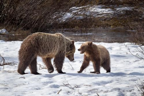 Stormy Sunset over Teton Mountains