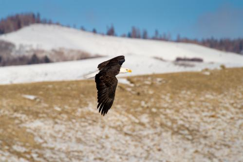 Blacktail Ponds and Teton Mountains