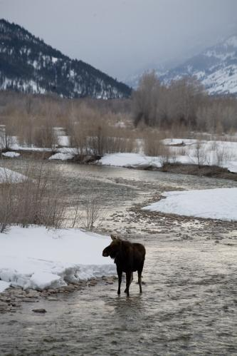 Sunrise Clouds over Teton Mountains