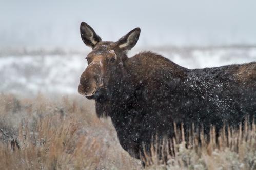 Old Barn and Teton Mountains