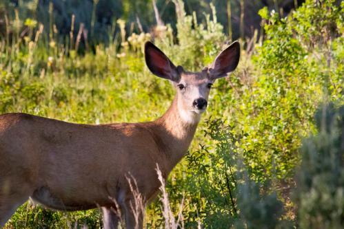 Mormon Row Houses and Barns