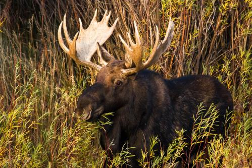 Worried Grizzly Bear Mother