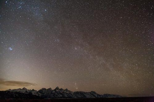 Grizzly Bear Sow and Cub in Wildflowers