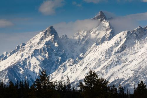 Grizzly Bear Sow in Front of Cub