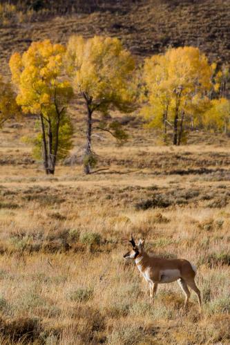Balsamroot Wildflowers Below Waterfall