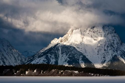 Mule Deer Doe and Fawns in Forest