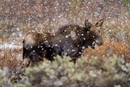 Great-Horned Owlets in Tree