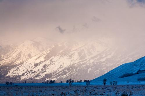 Mountain Bluebell Wildflowers in Granite Canyon