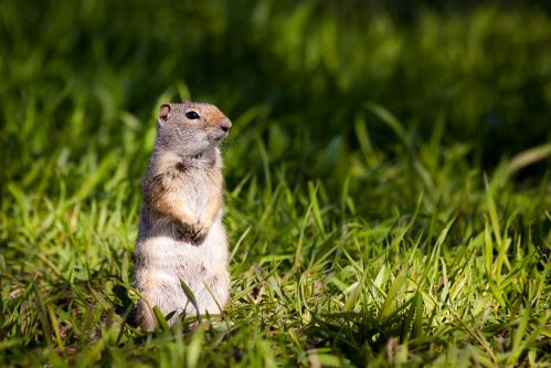 Granite Canyon Trail in Scree Field