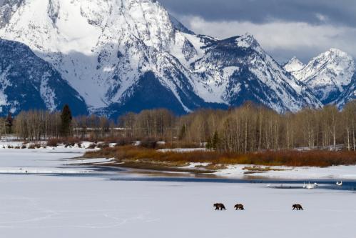 Balsamroot Wildflowers Above Granite Creek