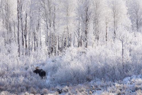 Meadow of Indian Paintbrush Wildflowers