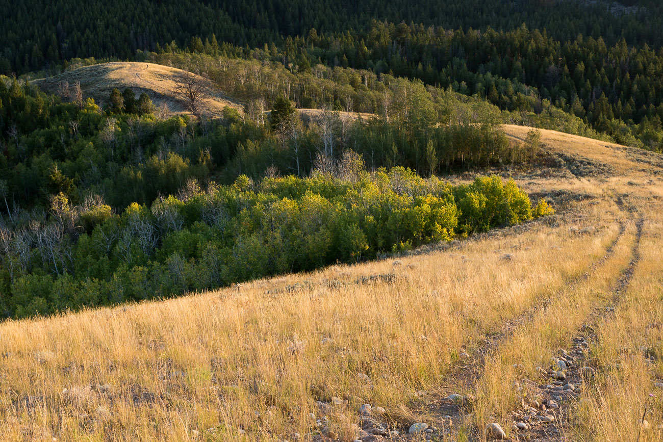 Perseid Meteor over Mountains