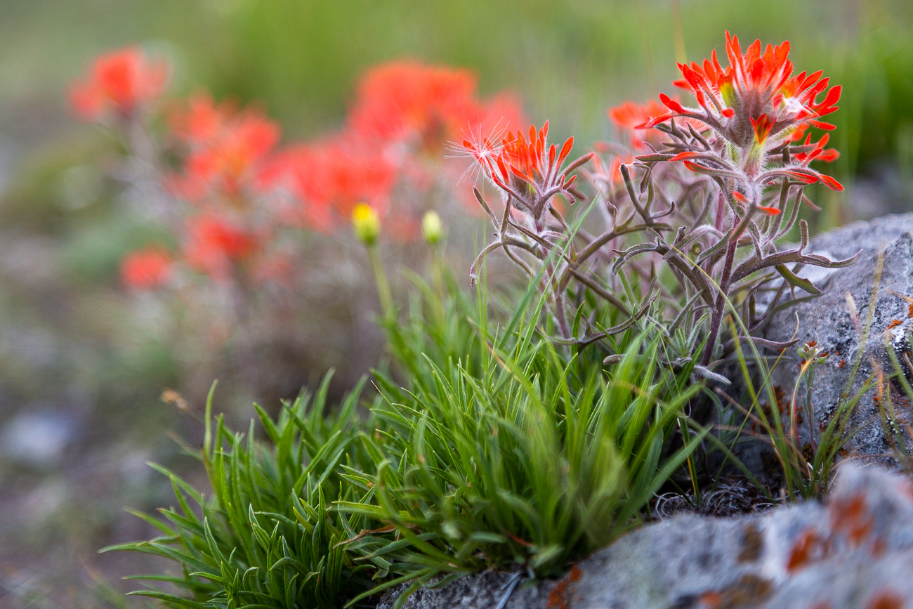 Northern Lights and Star Trails