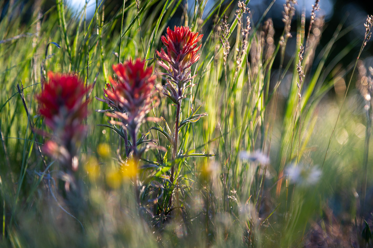 Northern Lights and Star Trails on Shadow Mountain