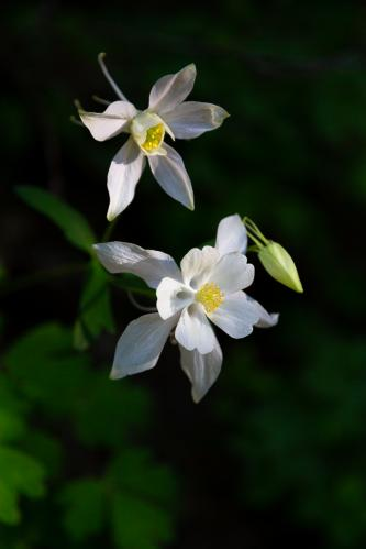 Rain Showers over Red Hills