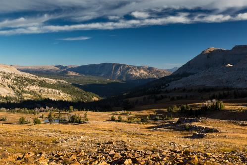 Pronghorn Buck Against Teton Mountains