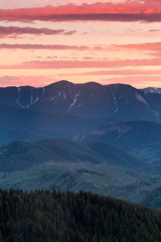 Fall Aspens and The Grand Teton