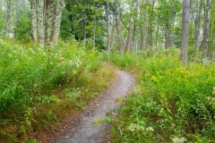 Otter Cove Trail in Forest