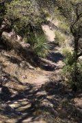 Oak Trees over Trail