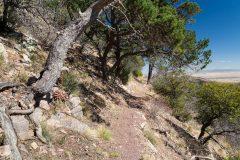 Crest Trail Below High Desert Trees