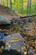 Fall Leaves Along Creek