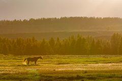 Horse in Golden Backlight