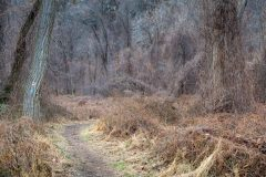 Hiking Trail in Winter Forest