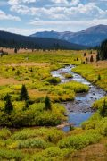 Willows Along Creek in Lush Valley