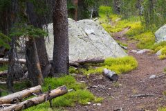 Beartooth Loop Trail in Forest