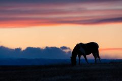 Silhouetted Mustang at Sunset