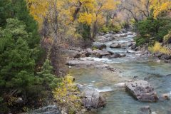 Shell Creek and Autumn Leaves