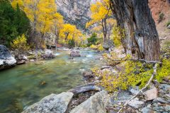 Fall Cottonwoods over Shell Creek
