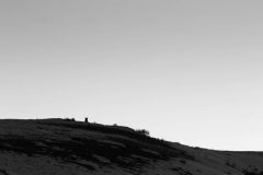 Silhouetted Coyote on Hilltop